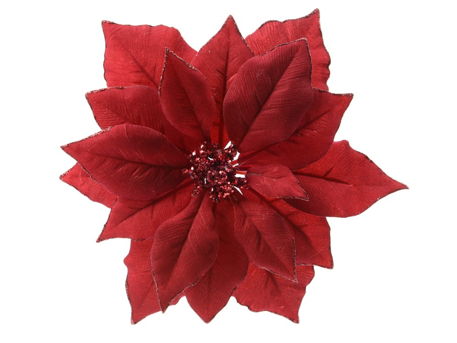 flor-pascua-roja
