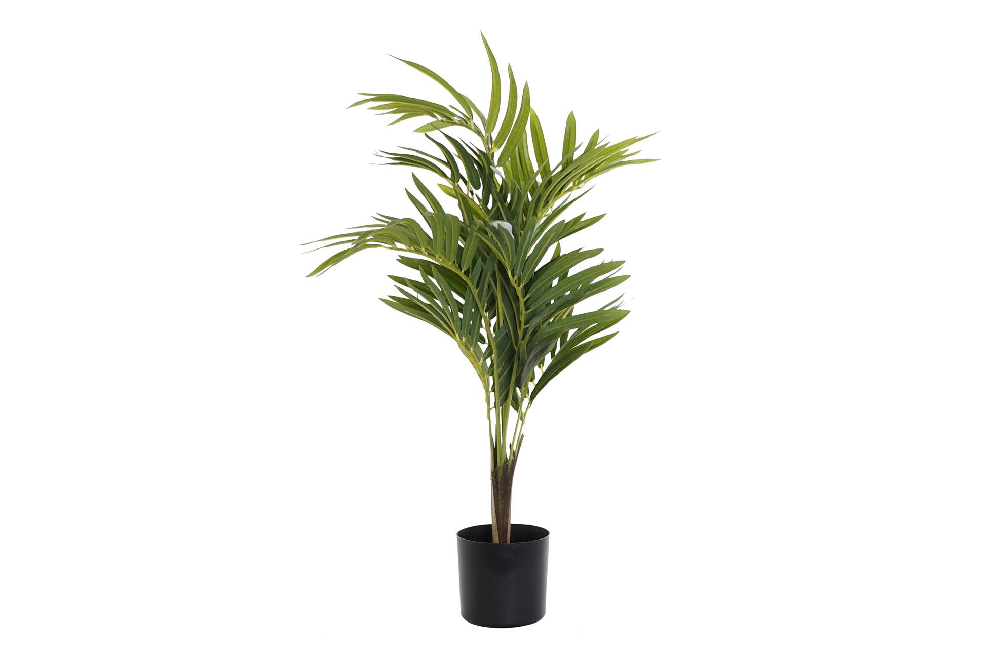 planta-palmera-verde