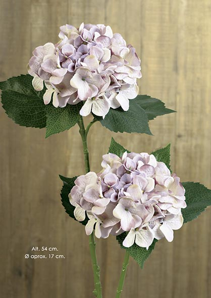 hortensia-lavanda