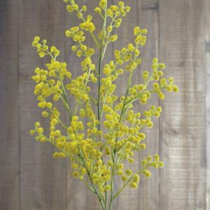 rama-mimosa-amarillo