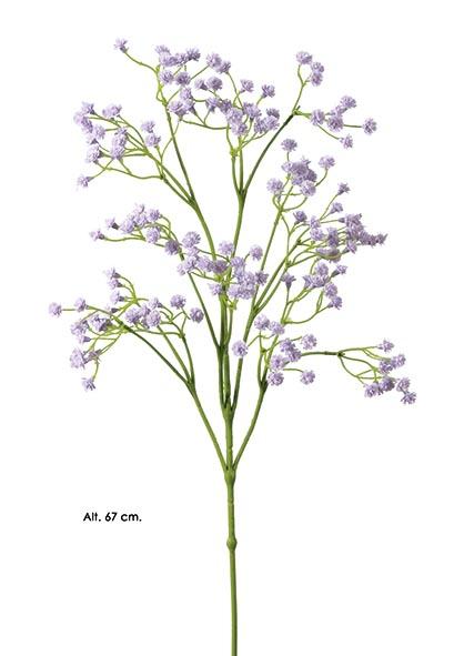 rama-paniculata-lila